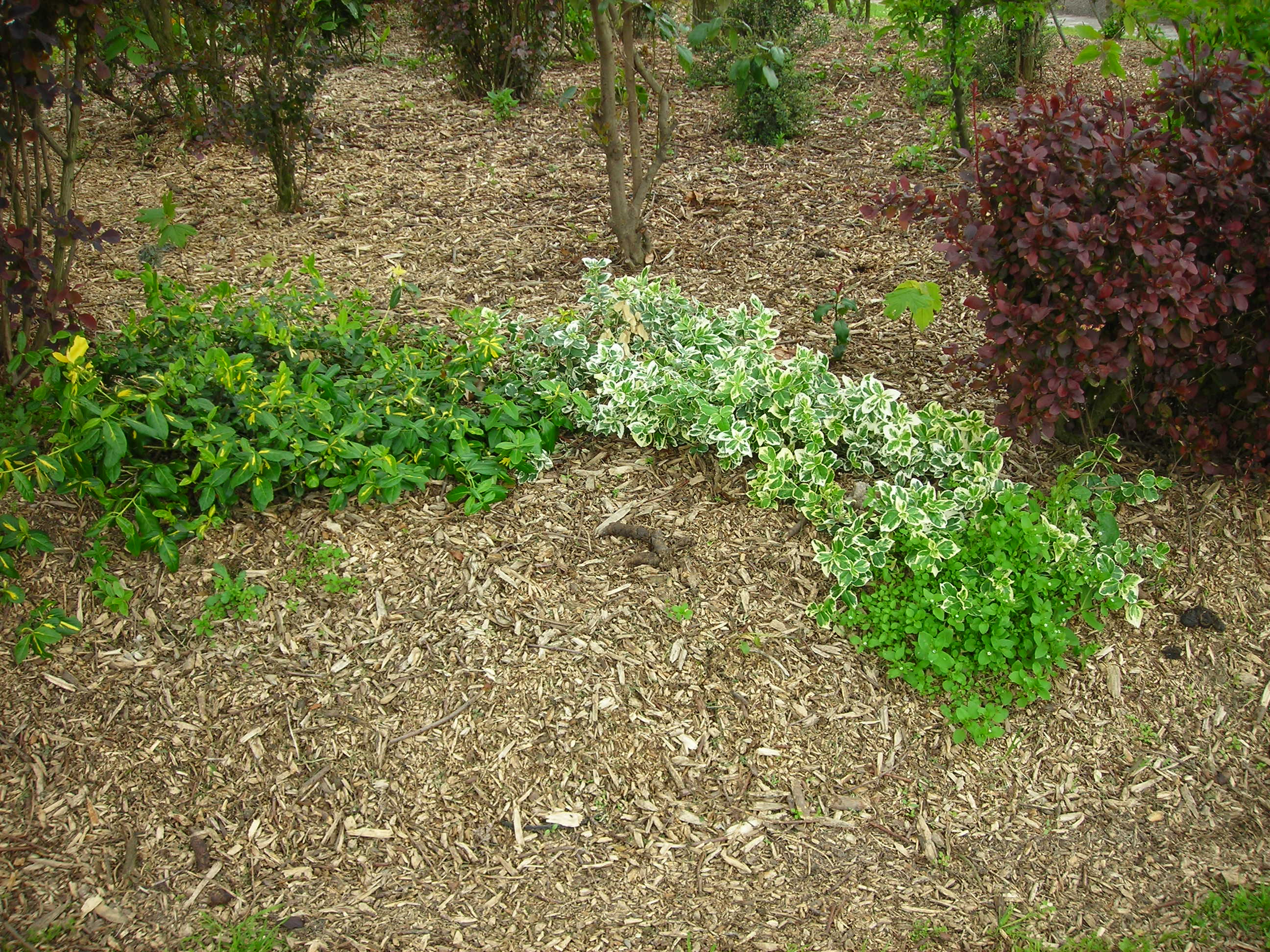The best mulches to use for your Minnesota garden