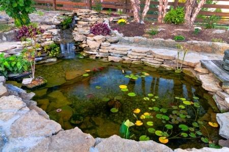 Build your own koi fish pond