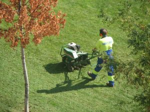 Person aerating a lawn