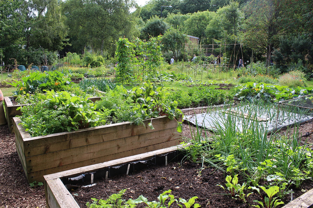 The Best Soil for a Raised Garden Bed