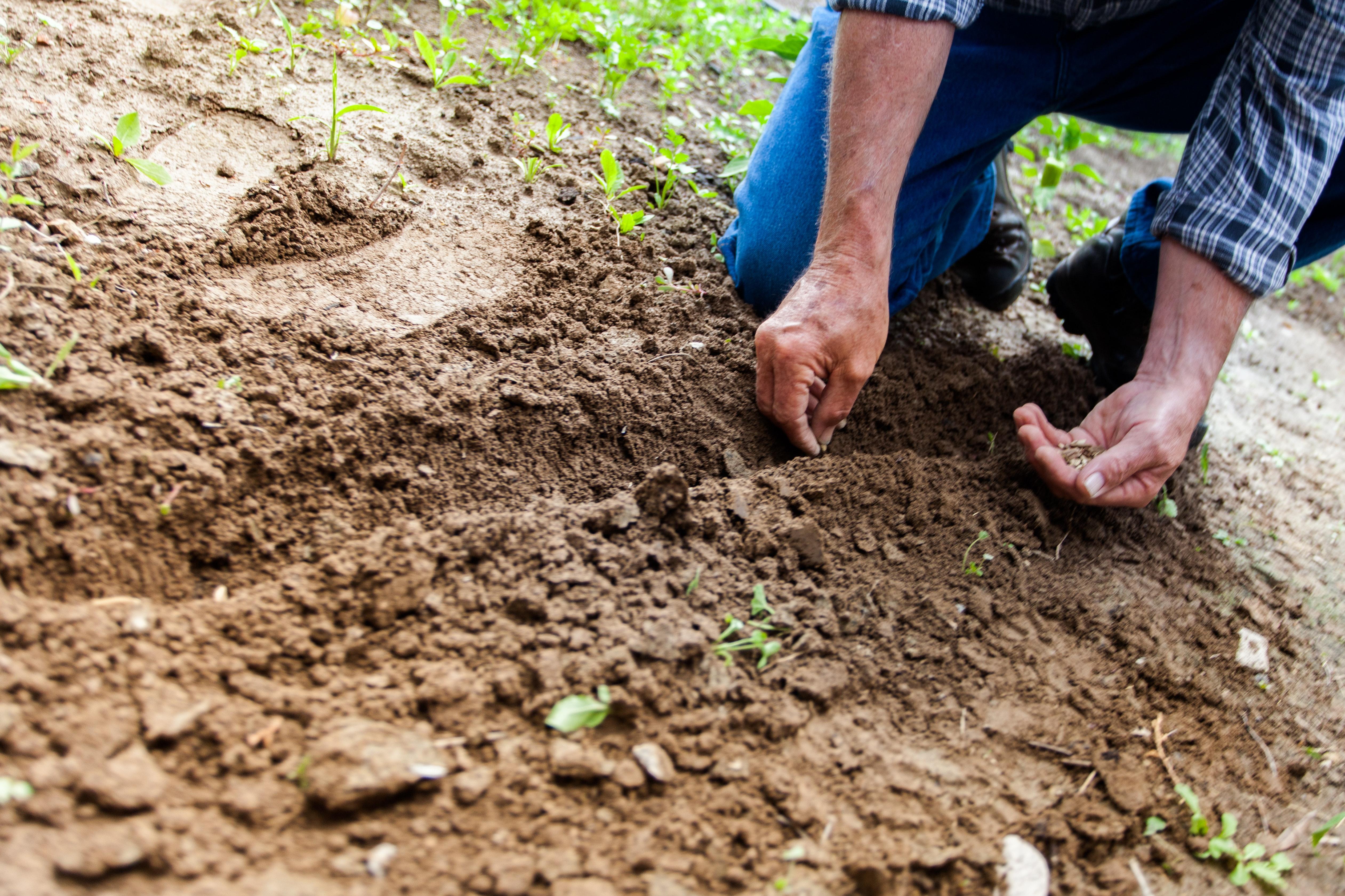 Using sand versus soil for landscaping.